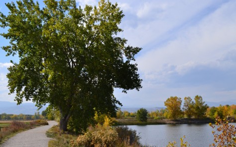 Cottonwood October 11, 2012
